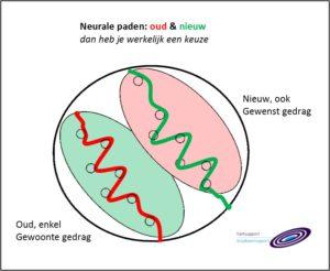 het nieuwe neurale pad bekrachtigen en verstevigen